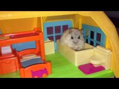 Cuteness overload: Watch these two hamsters ham it up at their little toy house ... just for you » Lost At E Minor: For creative people