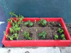 Raised bed herbs and veggies
