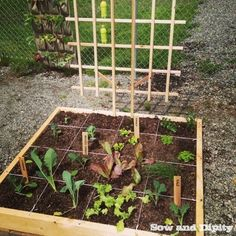 Square Foot Garden Method