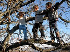 Loves climbing trees!