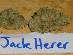 jack herrer - http://potterest.com/jack-herrer