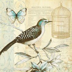 Vintage Bird Butterfly Print