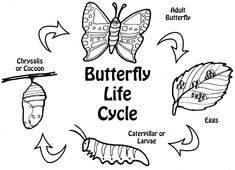 Butterfly Life Cycle Printable | butterfly life cycle coloring pages for kids