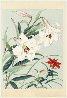 Lilies by Zuigetsu Ikeda (1877 - 1944)