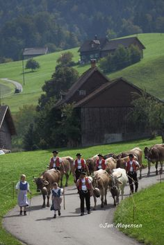 Farmers coming with the cows from the Alp to join the annual cow market in town in Toggenburg, SG