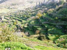 Palestine: Land of Olives and Vines – Cultural Landscape of Southern Jerusalem, Battir