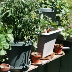 Container+Vegetable+Gardening