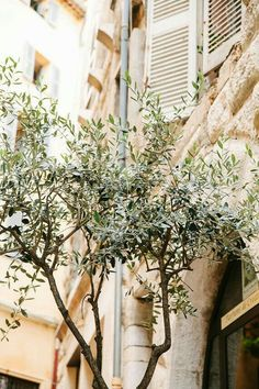Items similar to Olive tree - Fine Art Photography Provence French photos Wall Decor Office Art France Travel photo Photography Decoration on Etsy Office Wall Decor, Office Art, Tree Photography, Fine Art Photography, France Photography, Landscape Photography, Olives, A Sort Of Homecoming, Roots Drawing