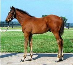 Well Armed as a foal. 2003