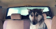 Мужчина нашел своего пса спустя 7 дней после разлуки