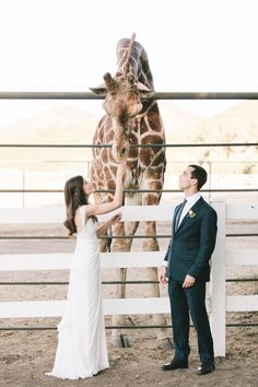 Stanley the African Giraffe meets the bride and groom