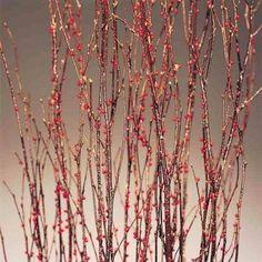 Berry Birch Branches