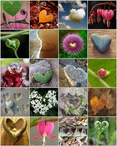 Nature is My Valentine! There is a underlying connection among all organisms, love. Collage Nature, Heart Collage, Heart Art, God's Heart, I Love Heart, With All My Heart, Happy Heart, Heart Pics, Heart In Nature
