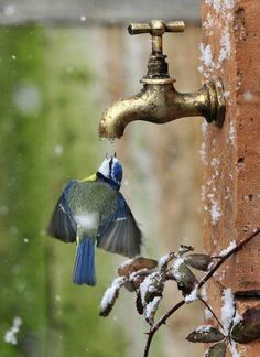 Thirsty bird:):):)  Photo