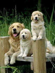 cutest family portrait ever!