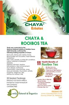 Chaya Plant, National Institute Of Nutrition, Heart Disease, Pimples, Cholesterol, Back Pain, Conditioner, Healing, Tea