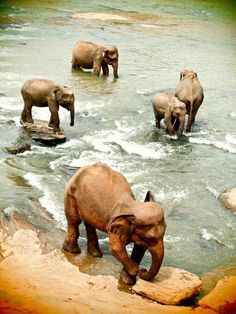 Sri Lanka. You can see beautiful wild animals in the Yala national park in the south. http://www.beadominator.com/
