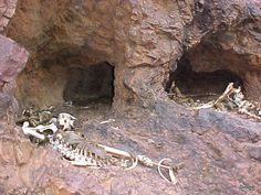 Dingo cave in Cania Gorge. My have eaten some tourists with my dingo friends.