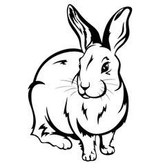 konijnen-0010