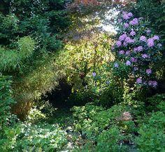 Spinrag: Warm meigevoel in de tuin.