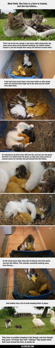 Della, The Cat Who Adopted Dinner#funny #lol #lolzonline
