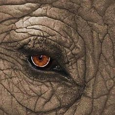 Elephant Wild for Wildlife and Nature | Facebook | All about nature | Scoop.it