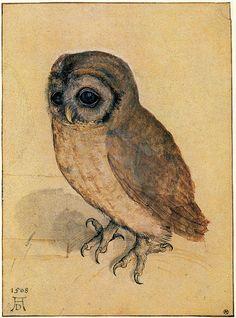 Tawny Owl, 1508, Albrecht Dürer (1471-1528)