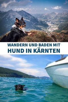 Wandern und Baden mit Hund in Kärnten. Unsere Tipps und Tricks für gelungene Ausflüge mit Hund in Österreich!  #urlaubmithund #hund #ausflugmithund #wandernmithund #badenmithund Tricks
