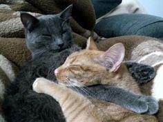 Amor espontáneo, incondicional y gatuno.. me los como! #cat #cats #gatos #gato #animals #animales #love