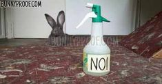 how to discipline your rabbit
