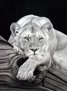 Realistic Animal Pencil Drawings (32)