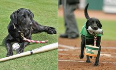 Spring Training—It's for the Dogs!