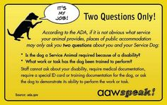 Here are the top 10 things Service Dog handlers want you to know about their canine partner, the law, access rights, and Service Dog etiquette. Service Dog Training, Service Dogs, Dog Training Tips, Stop Dog From Biting, Service Dog Patches, Psychiatric Service Dog, Socializing Dogs, Dog Commands, Military Dogs