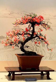 850 Best Bonsai Terrariums Orchids Airplants Succulents Mini