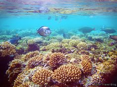 The coral reef of El Gouna, Egypt, Red Sea.