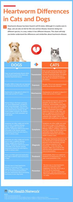 Heartworm Differences in Cats and Dogs