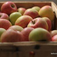 petrezselyemzöld télire - Eszter Befőz Apple, Fruit, Apple Fruit, Apples