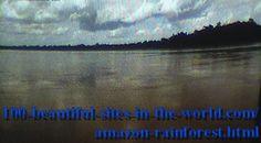 Amazonian Rainforest at Evening.