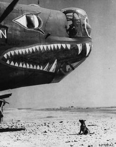 B-24 Liberator nose art and a brave dog.