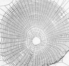 How To Preserve A Spiderweb