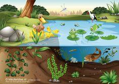 TOUCH this image: Interactieve praatplaat 'thema de sloot', kleuteridee.nl by juf Petra Pond Habitat, Frog Habitat, Rainforest Food Web, Sapo Frog, Pond Animals, Frog Theme, School Murals, World Water Day, Pond Life