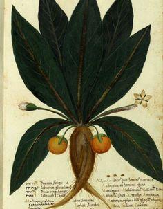 Ulisse Aldrovandi o Aldovrandi (Bologna, 11 settembre 1522 – Bologna, 4 maggio 1605) #TuscanyAgriturismoGiratola
