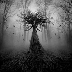 surreal photography forest - Google-søk