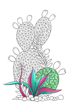 Adult Coloring Page, Succulent Plant Coloring Page, Cactus on NEO Coloring Pages 346 Adult Coloring Pages, Coloring Pages For Kids, Cactus Images, Tangle Art, Dyi Crafts, Planting Succulents, Cacti, Painted Rocks, Canvas Art