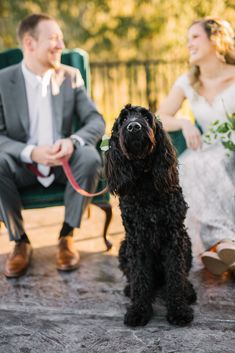 Photo taken by Brittany Bishop Photography Valley View, Dog Modeling, Allure Bridal, Bridal Boutique, Brittany, Special Day, Florals, Hair Makeup, Wedding Invitations