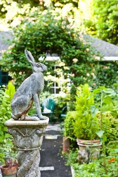 A rather regal rabbit stands sentinel in front of the arbor.