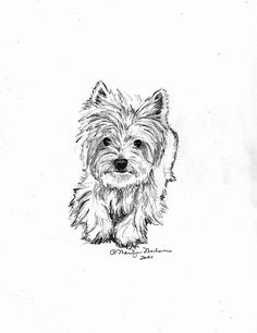 Dog And Puppies Drawings Westie.Dog And Puppies Drawings Westie West Highland Terrier, Animal Drawings, Art Drawings, Pencil Drawings Of Animals, Drawing Animals, Dog Tattoos, Cairn Terriers, Westies, Pencil Drawings