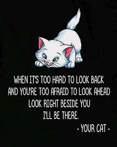 Cat Quotes, Animal Quotes, Crazy Cat Lady, Crazy Cats, Fancy Cats, Cat Signs, Beautiful Cats, Cat Life, Cat Memes