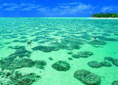 Heron Island: gem of reef | Otago Daily Times Online News : Otago ...