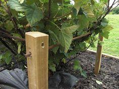 Garden Trellis, Garden Fencing, Garden Beds, Willow Garden, Allotment Gardening, Deco Nature, Shabby Chic Garden, Growing Gardens, Black Garden